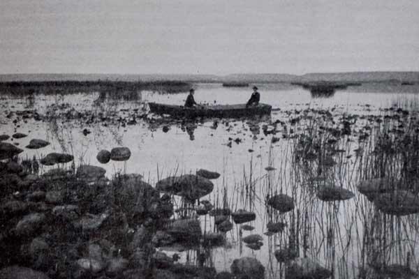 Fotografi föreställande en eka i Hornborgasjön