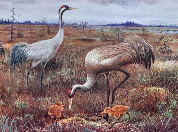 Målning föreställande tranor, två vuxna och två barn