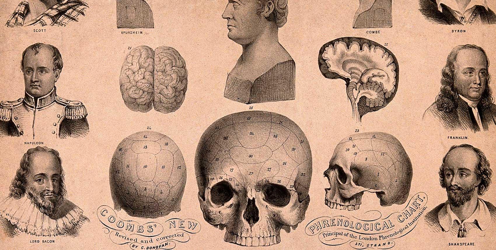 Litografi föreställande frenologiskt diagram och flera kända personers huvuden