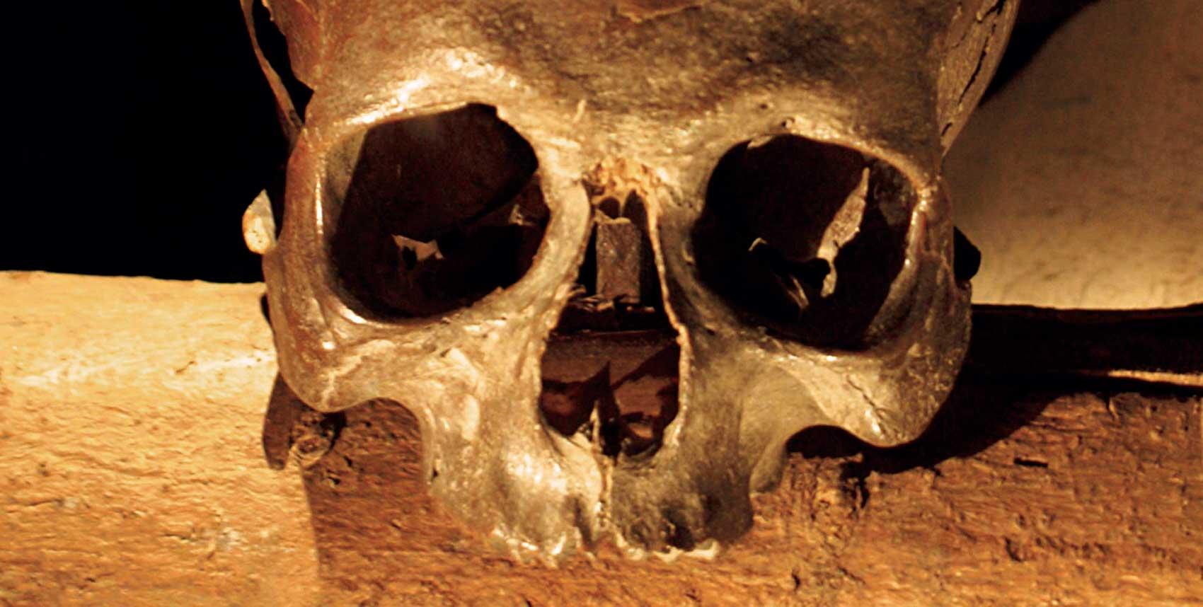 Bild som visar en skalle vilande på en stock
